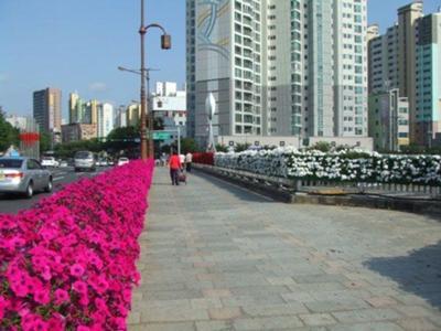 Daegu Bridge Garden 2