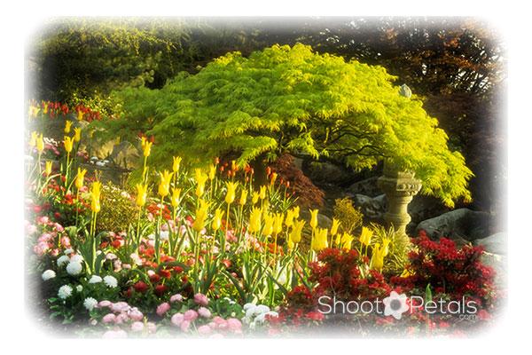 Queen Elizabeth Park garden - the quarry garden.