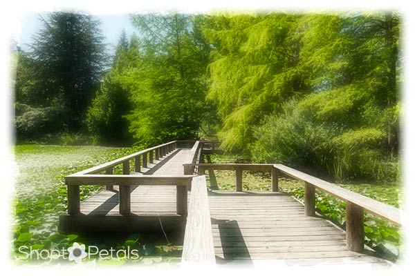 Wooden walk across Cypress Pond at VanDusen Garden.