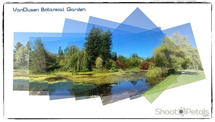 iPhone 5s Photo VanDusen Garden Cypress Pond