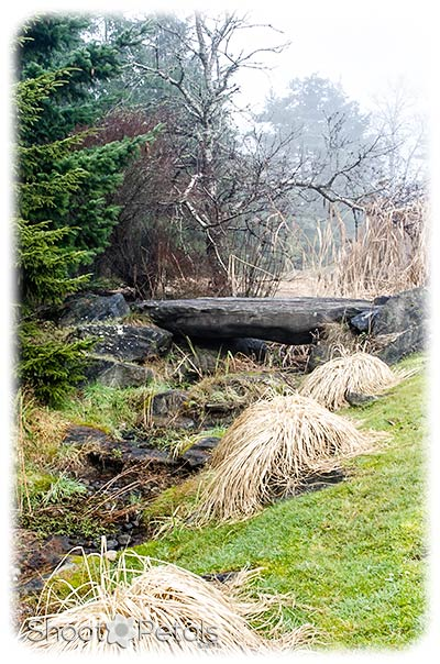 A winter day in VanDusen Botanical Garden.