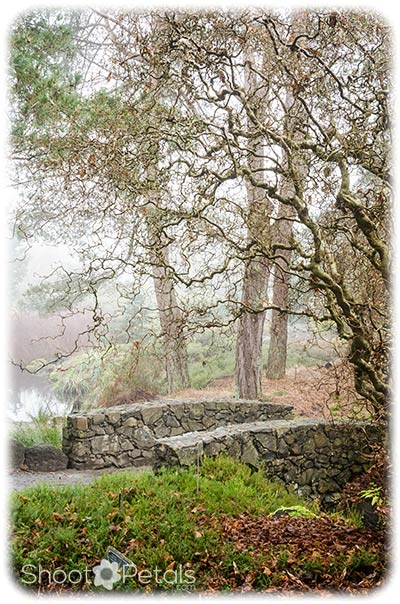 Stone bridge and Gnarly Tree at VanDusen's.