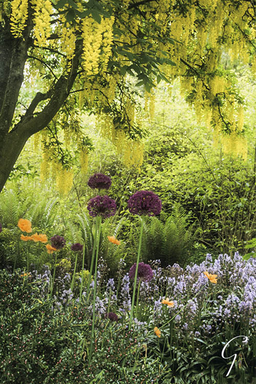 Vandusen Botanical Garden - Laburnum Garden