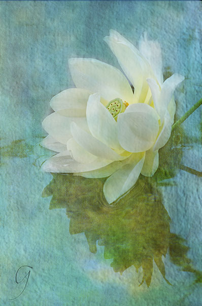 white lotus blossom cracked glass teture