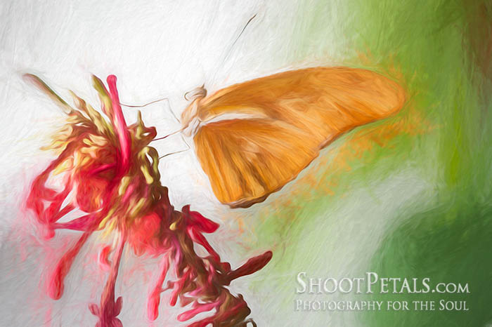 Pretty Pink Blossoms and Butterfly Impressionist Photo