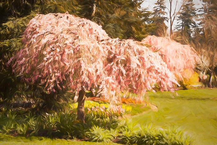 Vancouver Cherry Blossom Festival, VanDusen Botanical Garden