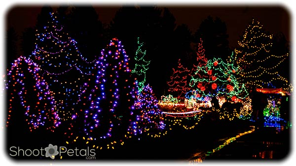 VanDusen Botanical Garden is my favourite winter festival on the Lower Mainland. The number of lights is staggering. This festival was just before a huge renovation.
