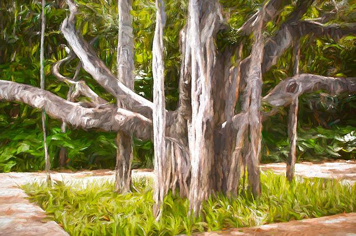 Shangri La Banyan Tree Front Yard