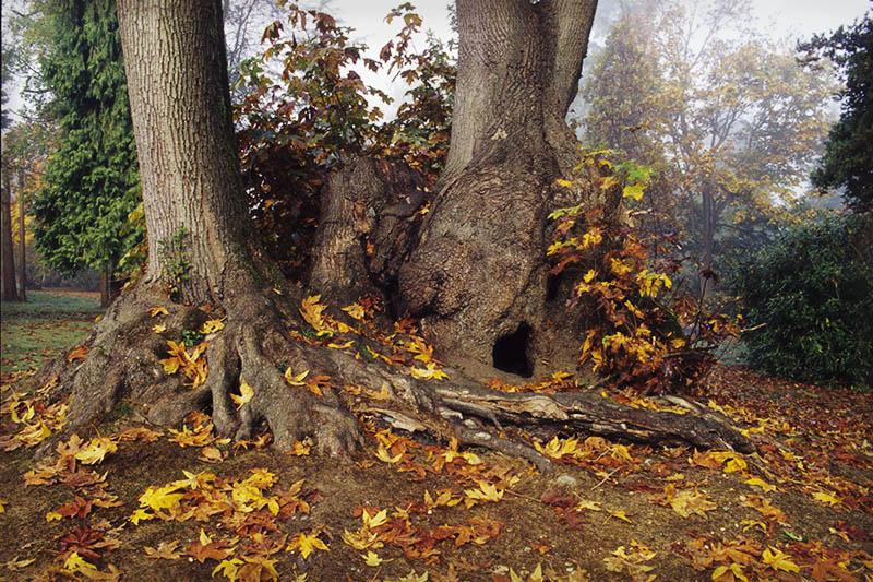 Trees In Fog, Stanley Park