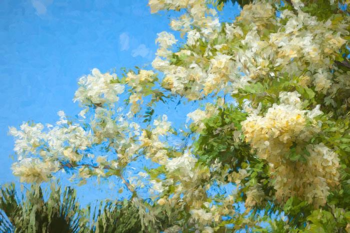 Painterly Flowering Trees Fort Debussy Honolulu
