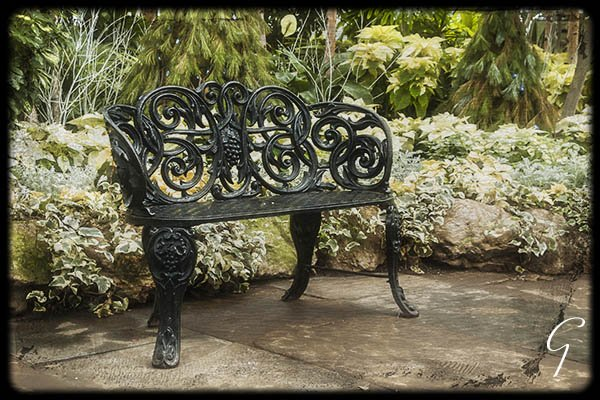 Winter At Allan Gardens - Iron Bench Poinsettias