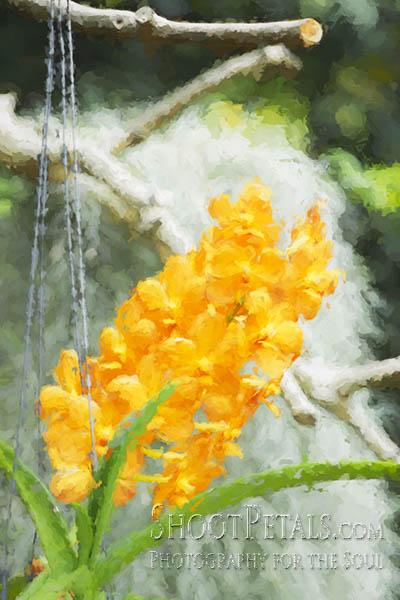 Dark Yellow Orchids Yeomiji Indoor Flower Garden