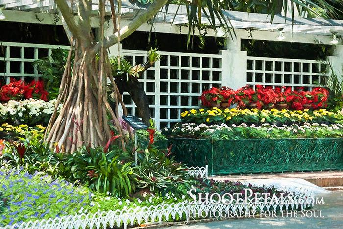 Begonias, Yeomiji Indoor Flower Garden
